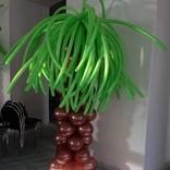 palmy1